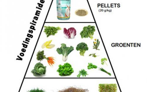 voedingspiramide, joke pottie, dierenarts, gistel