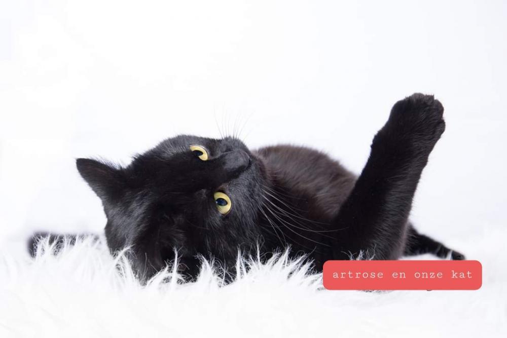 artrose bij de kat, dierenarts joke pottie, dierenarts gistel