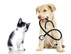joke pottie, dierenarts gistel, dierenverzekering